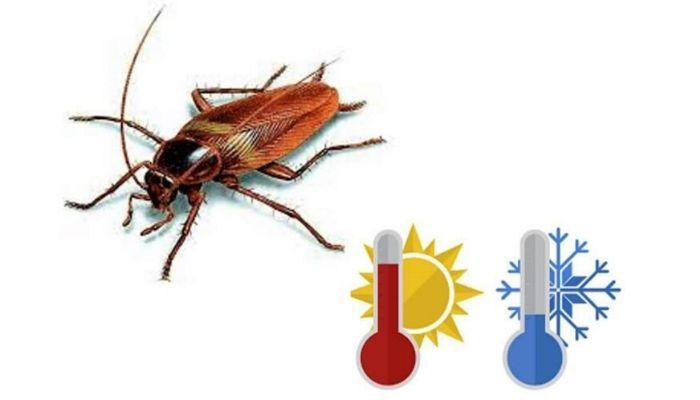 Почему дома заводятся тараканы и как их выгнать из квартиры