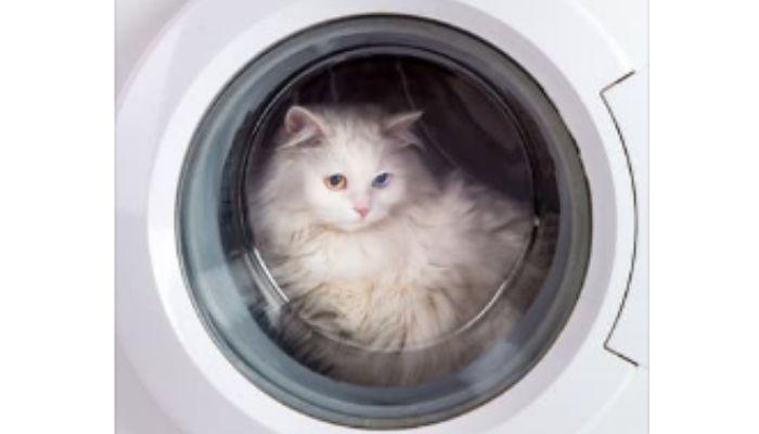Как почистить стиральную машинку лимонной кислотой
