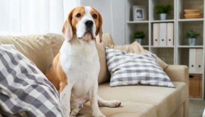 Что делать если собака гадит дома