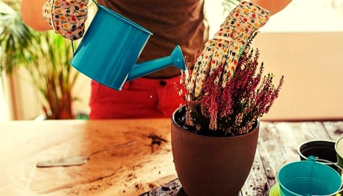 7 чудодейственных подкормок для комнатных цветов