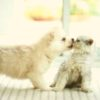 Котёнок с щенком