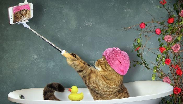 Кошек можно мыть не часто